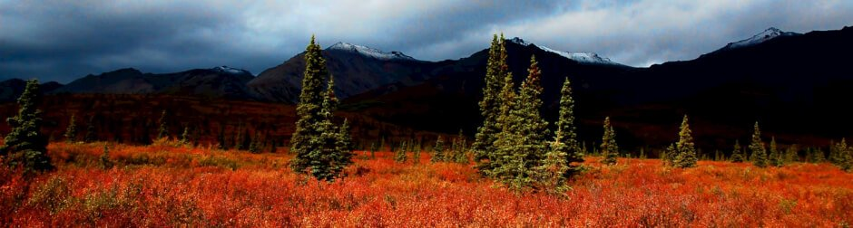 best travel photos 2013, Denali national park