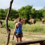 Gazing at Swaziland's white rhinos at Royal Hlane National Park's campsite water hole.