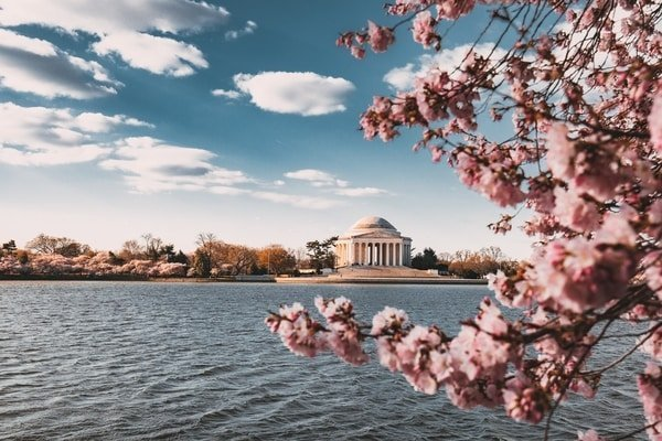 Cherry Blossom during Spring time