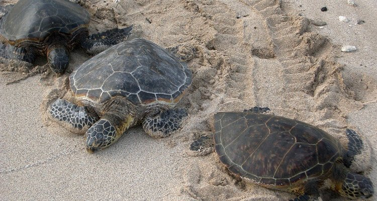 keeping-loggerhead-sea-turtles-safe
