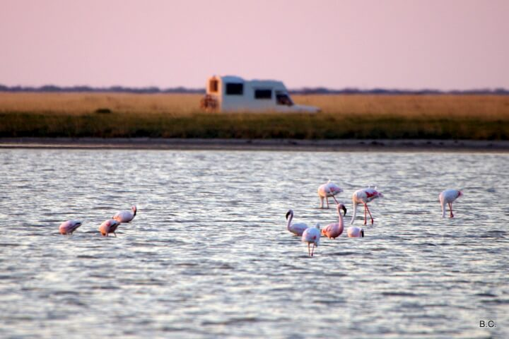 Parked for the night with the pink flamingoes at the Sowa Pan, in Botswana.