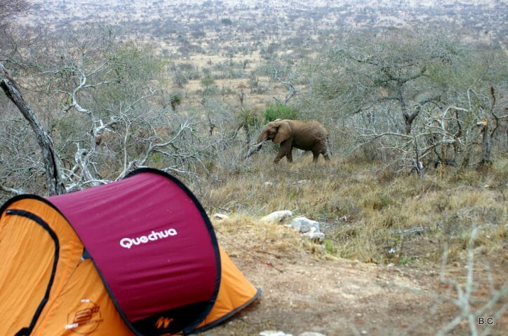 Camping inside a national park gives you up-close encounters with the wild animals of Africa.