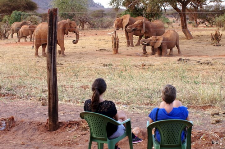 Watching the elephants drink from the water hole at the edge of Tsavo East National Park, for free from our lodge.