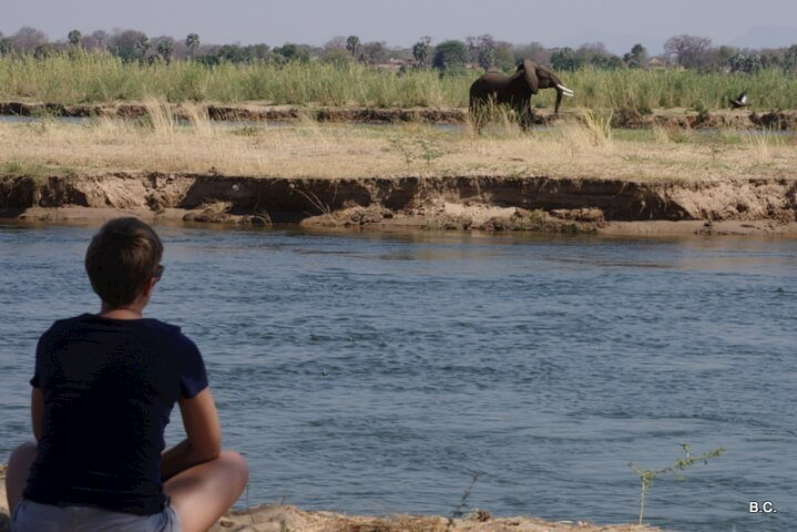 A surprise encounter with an elephant along Chirundu's Zambezi River.