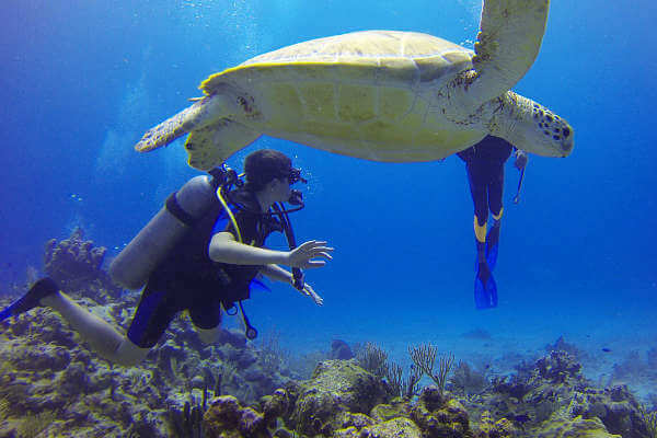 adjusting-to-life-in-a-new-country-diving