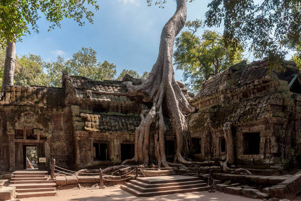siem-reap-bayan-tree