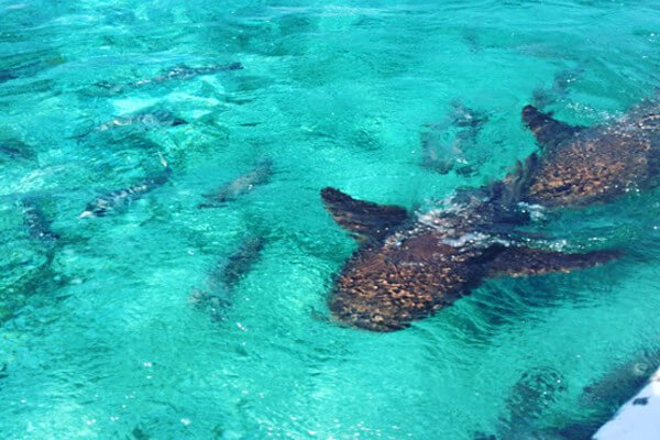 best-things-to-do-in-belize-snorkel