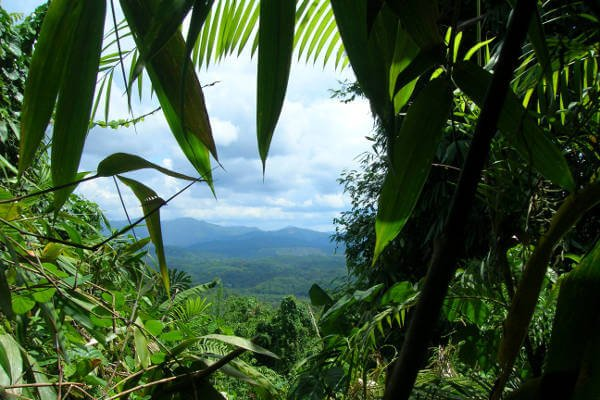 borneo-best-things-to-do-jungle