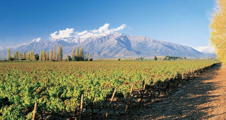 casablanca-wine-valley-in-chile