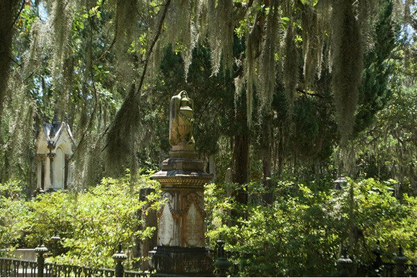 things-to-do-in-savannah-georgia-moss