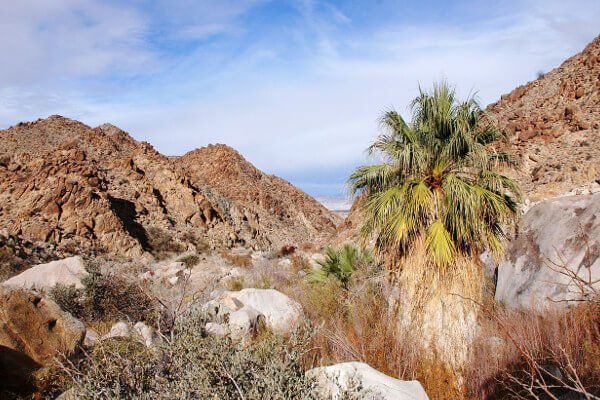 five-spring-break-destinations-palm-springs