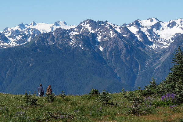 things-to-do-in-olympic-national-park-hurricane-ridge