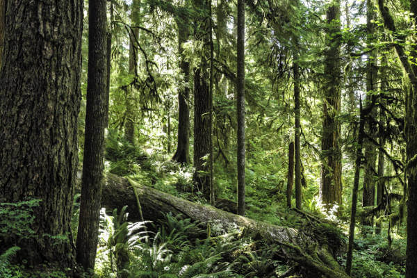things-to-do-in-olympic-national-park-rainforest