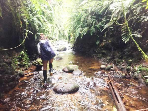 Things to do in Ecuador - Creek-Walk-Amazon